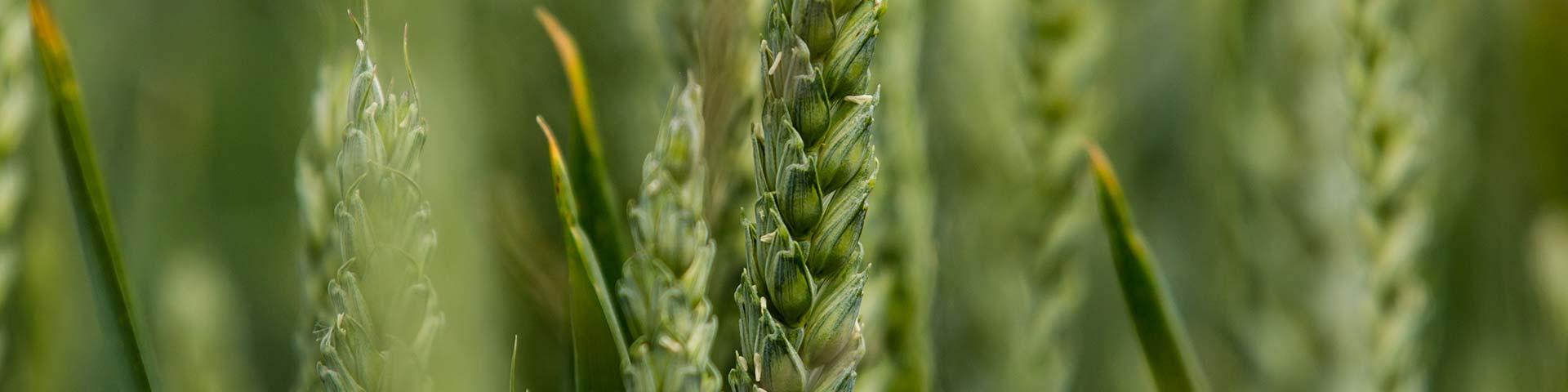 Crop diversity & agronomy